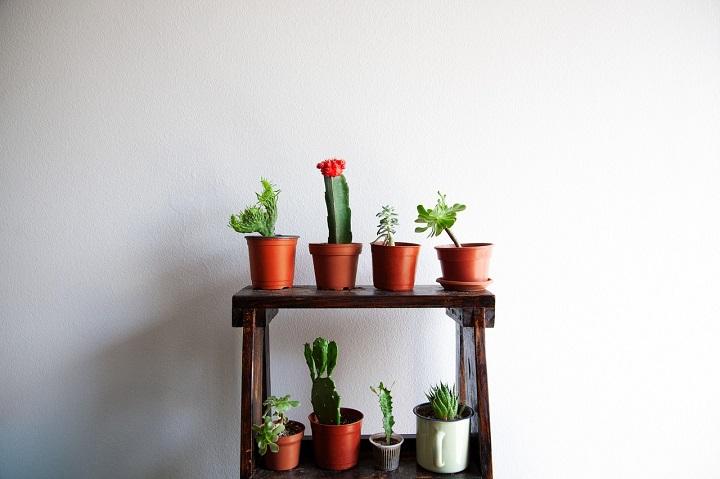 Cactus tafeltje
