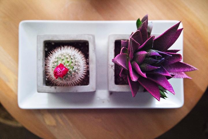 Cactus met kleur