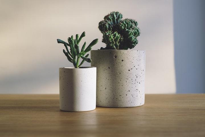 Cactus op tafel